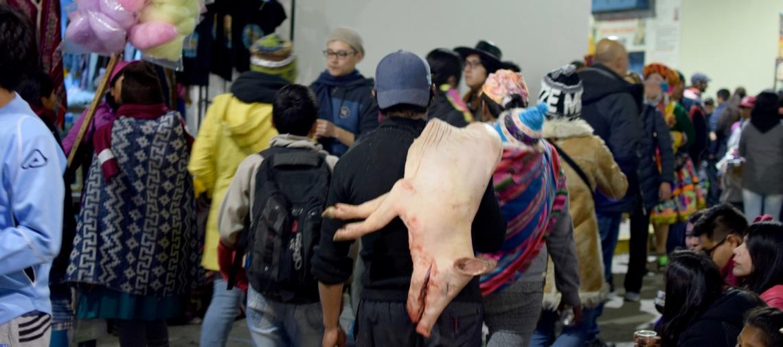 Schwein Paucartambo.jpg